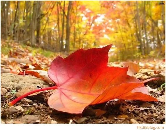 autumn fall outono folhas caindo cores