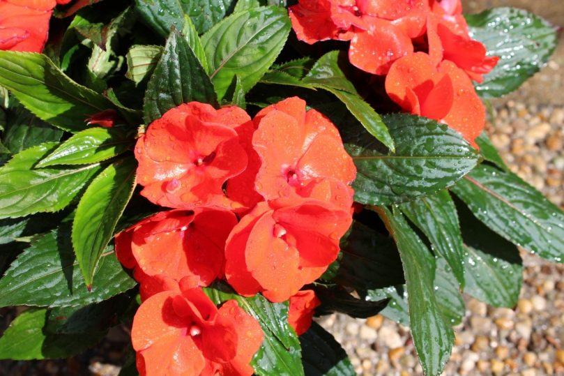 flores f;owres primavera spring