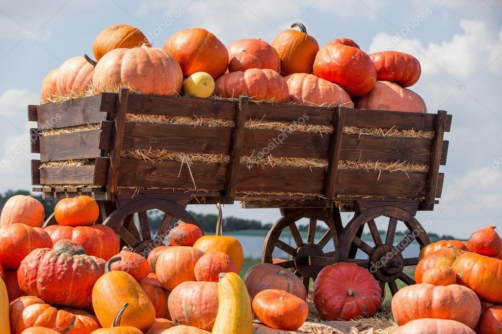 fall autumn outono pumpkin patch aboboras