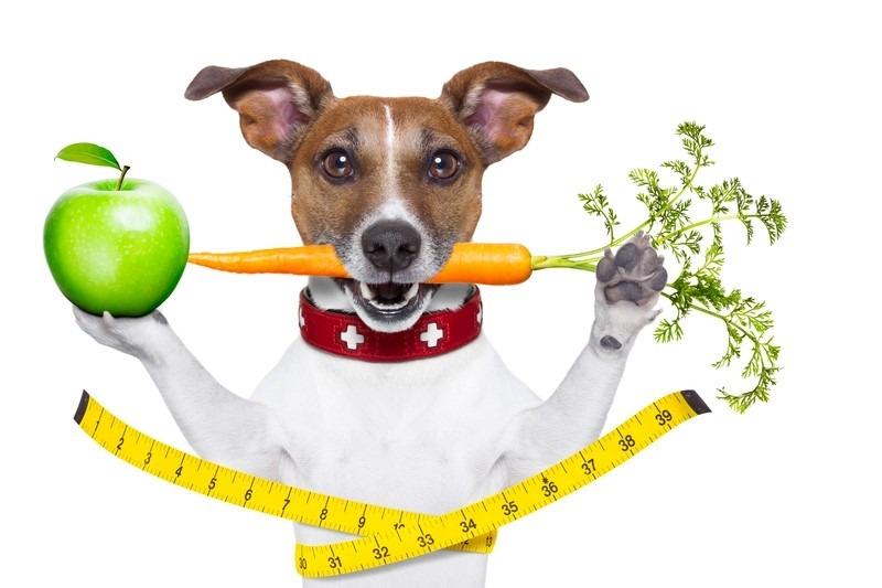 dieta perder peso motivado