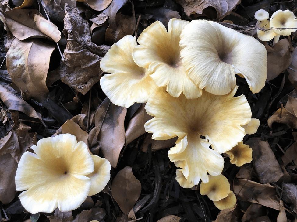 mushrooms cogumelos verao hemisferio norte