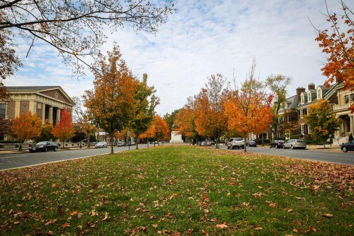 outono fall autumn folhas leaves USA