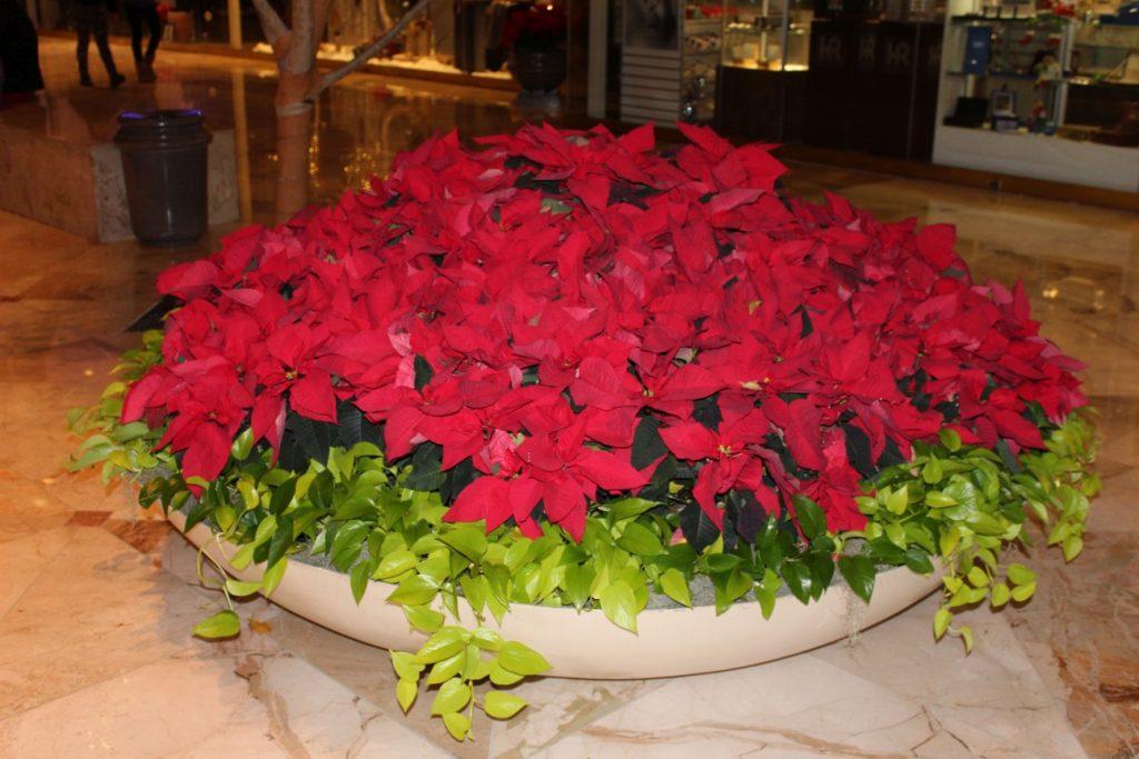 E estas flores maravilhosas para deixar tudo mais bonito!