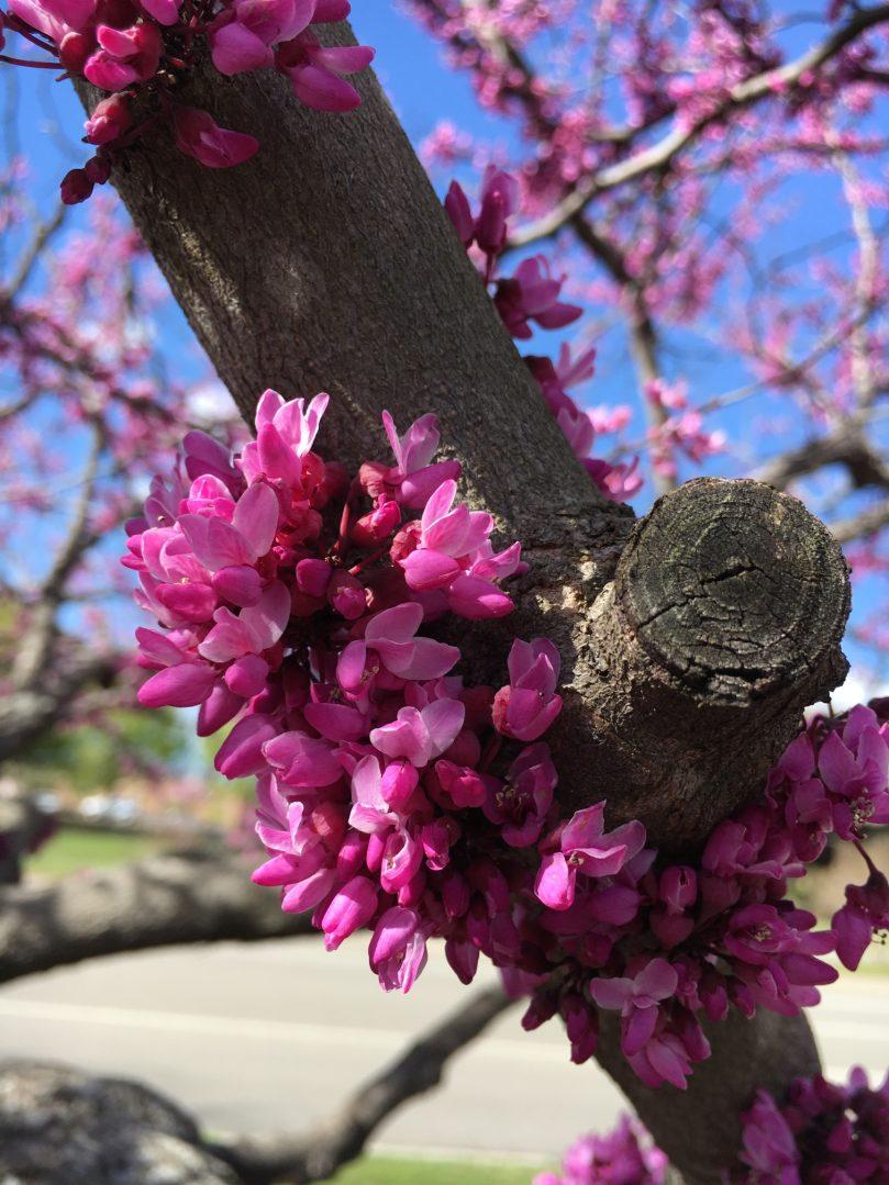 Primavera flores fowers
