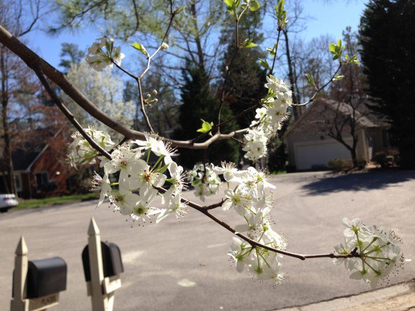 primavera curiosidades