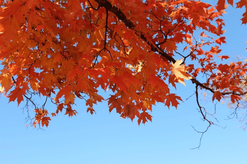fall autumn outono folhas leaves color