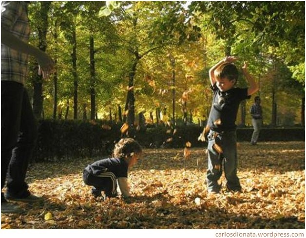 outono fall autumn aventuras leaves folhas