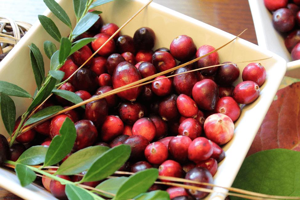 cranberry oxicoco sauce molho fruta