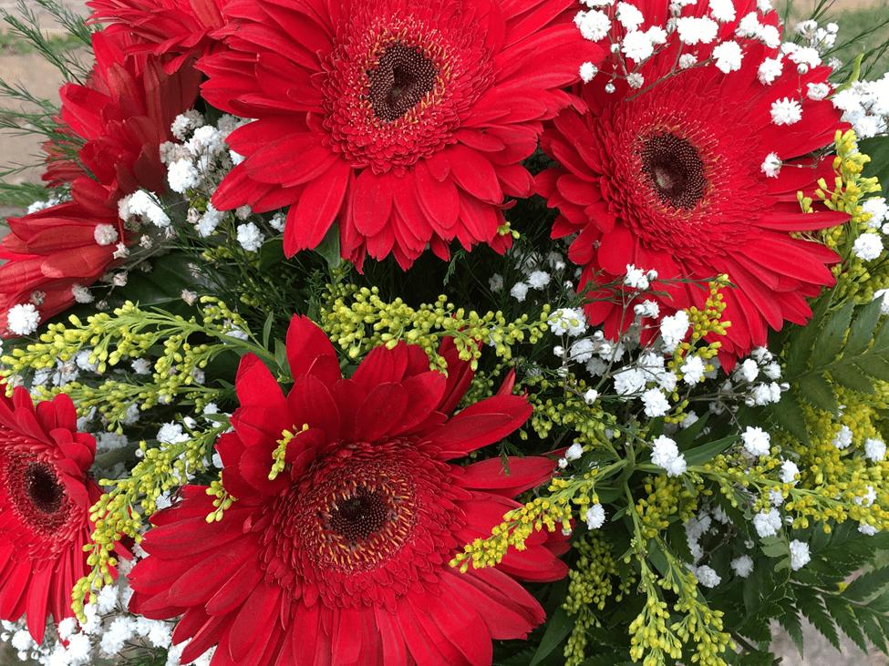 flores vermelhas valentines day red flowres dia dos namorados amor love