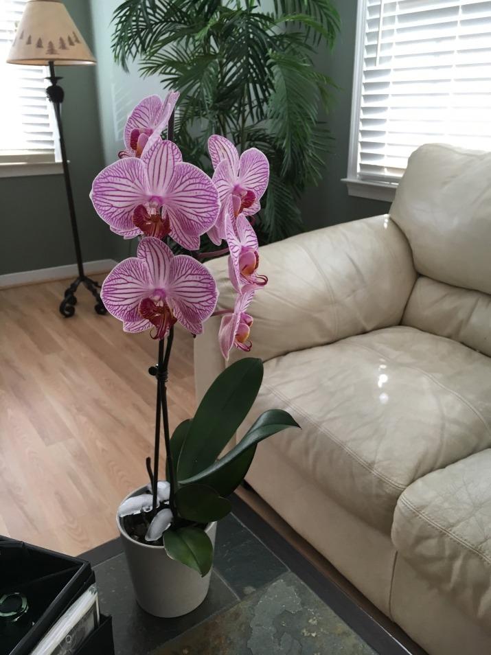 dicas limpeza flores casa orquidea