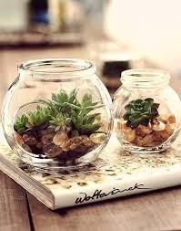 mimos natl ecologicos