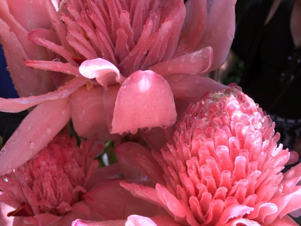 flores litoral fotografia